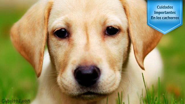 ¿Cómo cuidar un cachorro?