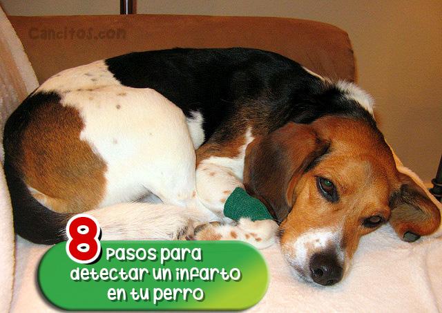 Tu perro puede morir de repente por un infarto: Detectalo a tiempo con estos 8 pasos