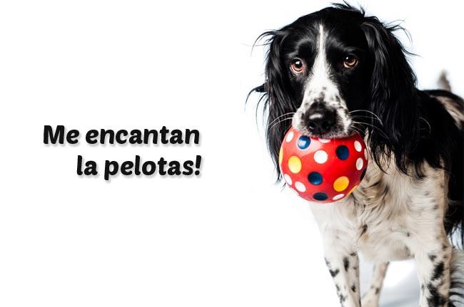 Los juguetes recomendados para tu perro.