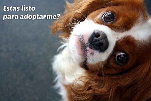 Adopción de perros, lo que debes saber sobre éste bondadoso acto humano