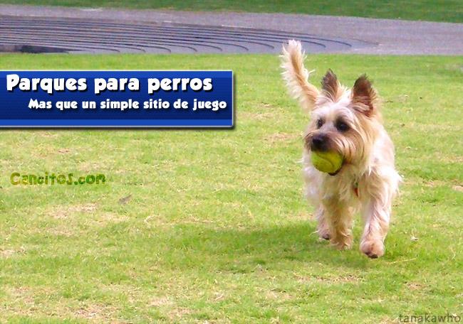 Parques para perros: Espacios caninos exclusivos