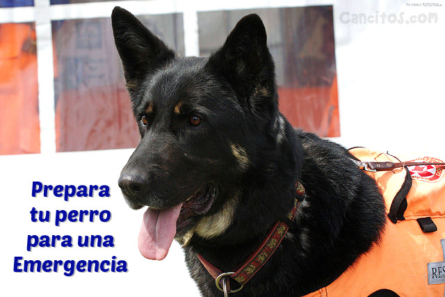Refugios para perros