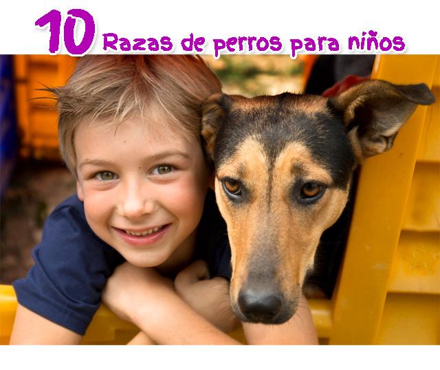 Perros para niños – Las 10 razas mas recomendadas para el hogar
