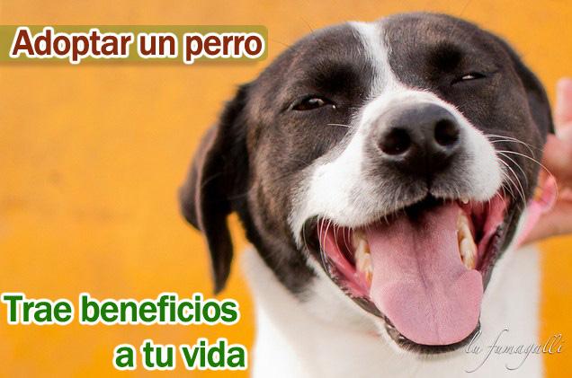 Adopción de perros, cuidados y beneficios