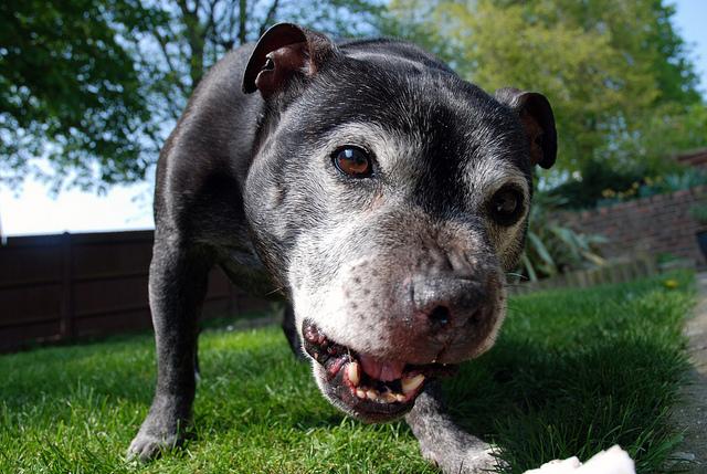 Ladridos de perros: Significados y comunicación canina