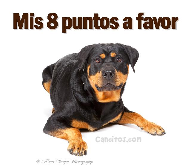 Fotos de perros Rottweiler