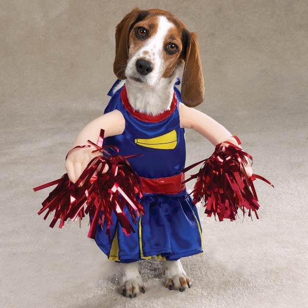 Diafraces para perros buenos (2)