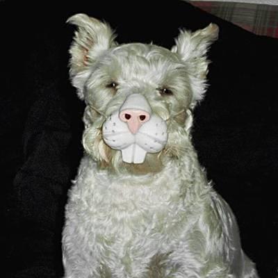 Diafraces para perros buenos (31)
