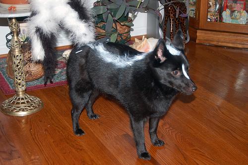 Diafraces para perros buenos (4)