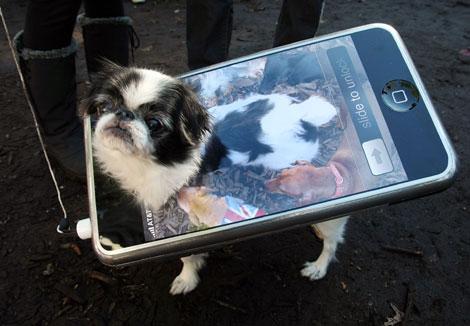 Diafraces para perros buenos (44)