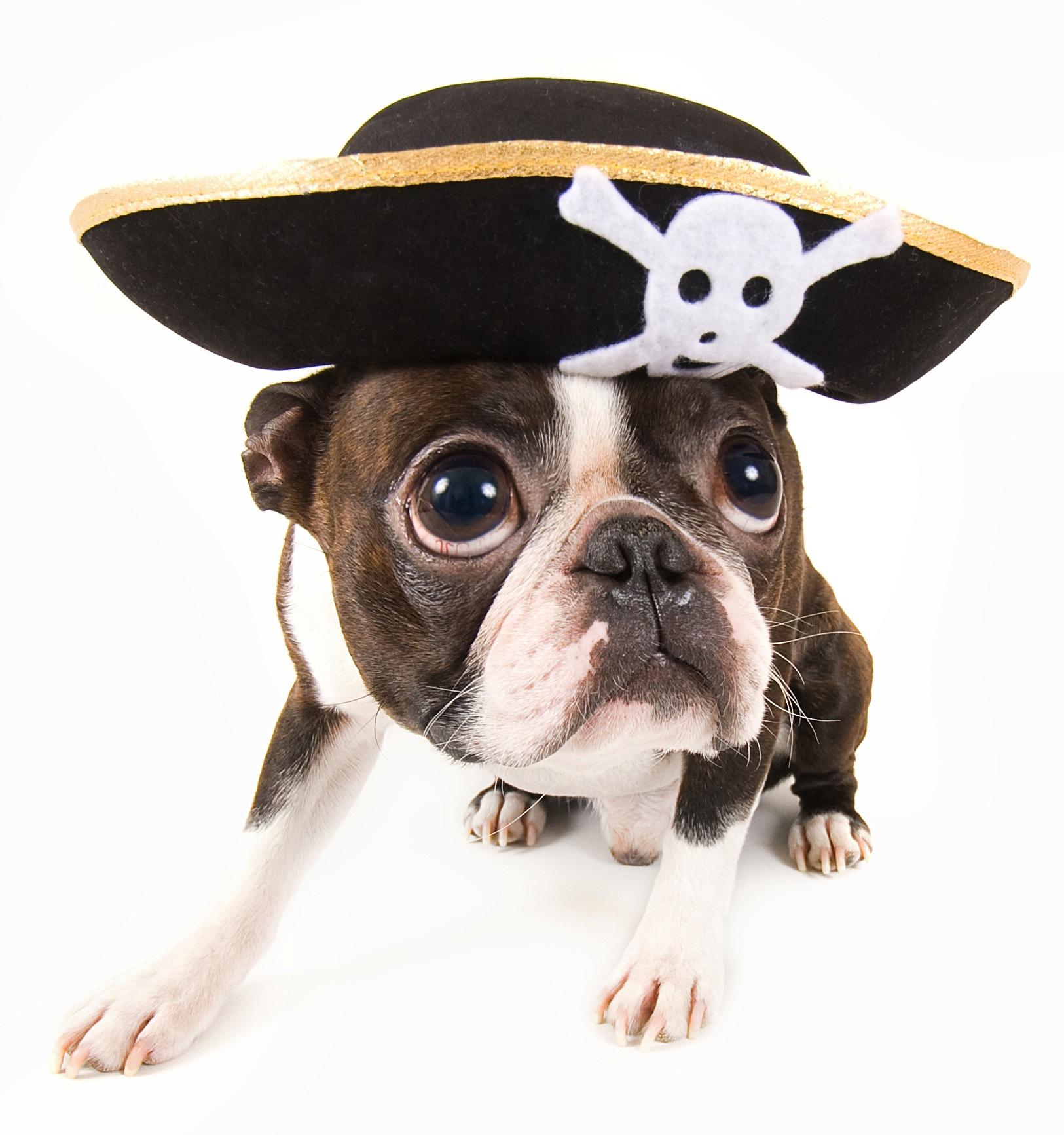 Diafraces para perros buenos (6)