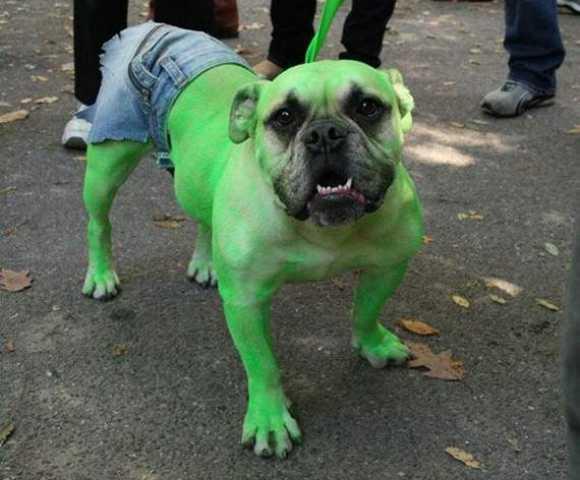 Diafraces para perros buenos (7)