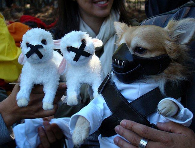 Diafraces para perros buenos (9)
