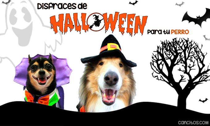 Disfraces para perros en halloween 40 ideas originales for Disfraces para perros