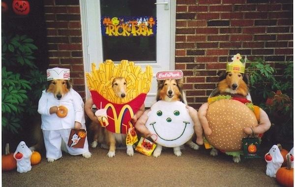 Disfraces para perros en halloween (10)