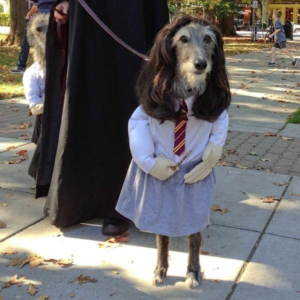 Disfraces para perros en halloween (11)