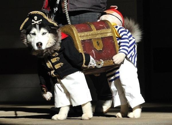 Disfraces para perros en halloween (12)