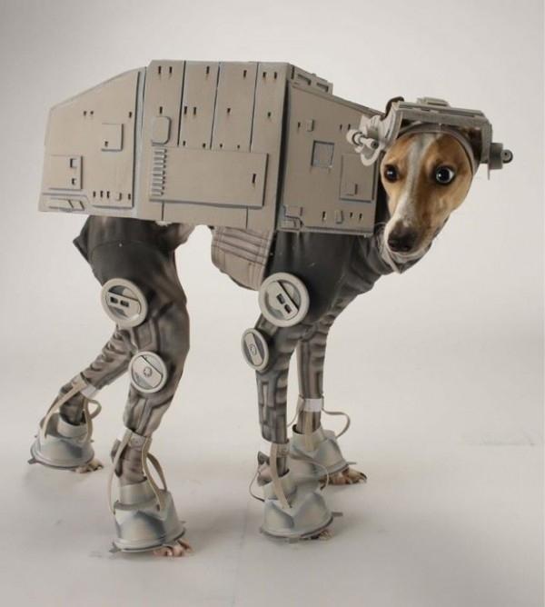 Disfraces para perros en halloween (2)