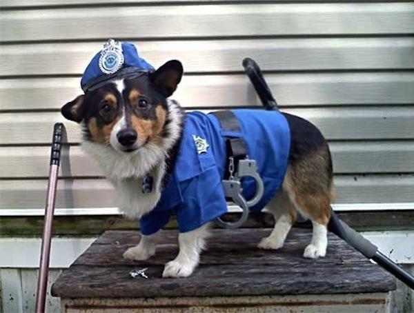Disfraces para perros en halloween (21)