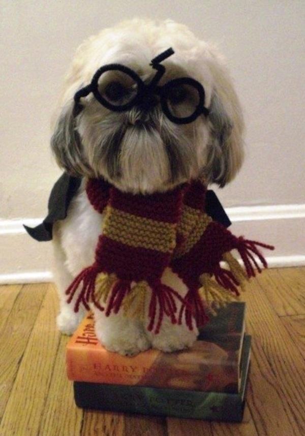 Disfraces para perros en halloween (23)