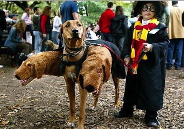 Disfraces para perros en halloween (3)