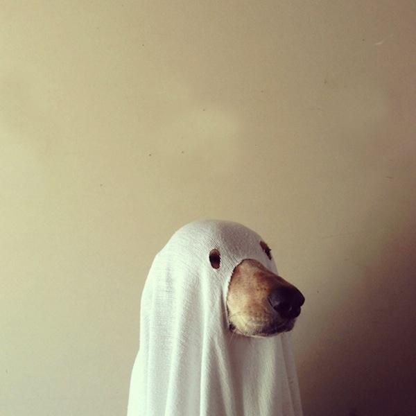 Disfraces para perros en halloween (5)