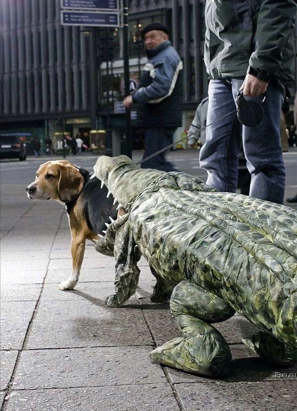 Disfraces para perros en halloween (7)