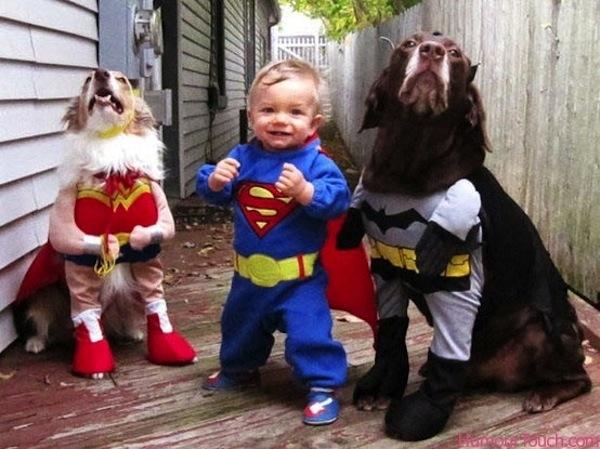 Disfraces para perros en halloween (9)