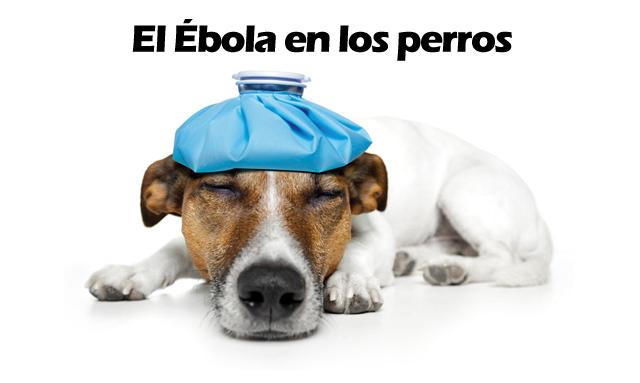 Fotos de perros enfermos (Virus del Ébola)