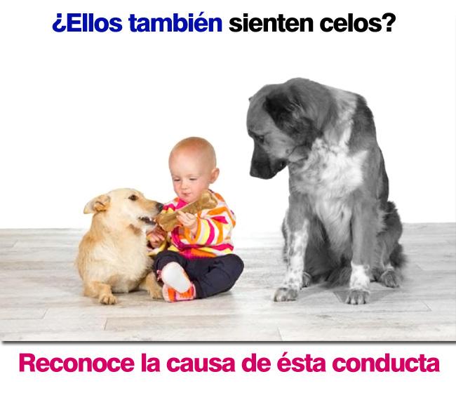 Porque los perros son celosos
