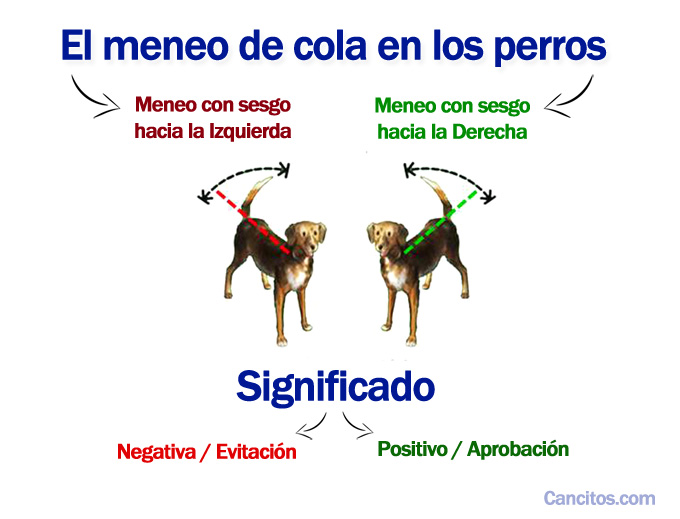 El meneo de cola en los perros