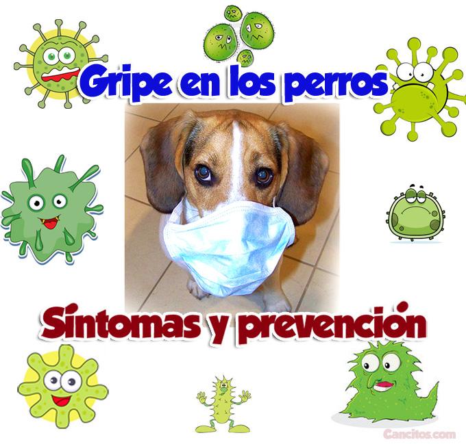 Foto de perros con gripa y sus cuidados