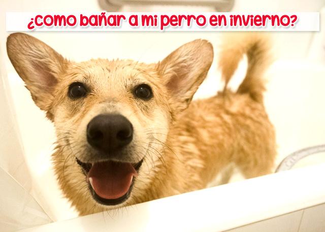 Bañar a los perros en invierno