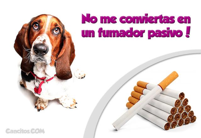 ¿Cómo el fumar puede poner en peligro la salud de tus mascotas siendo fumadores pasivos?