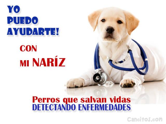 olfato canino detecta cancer