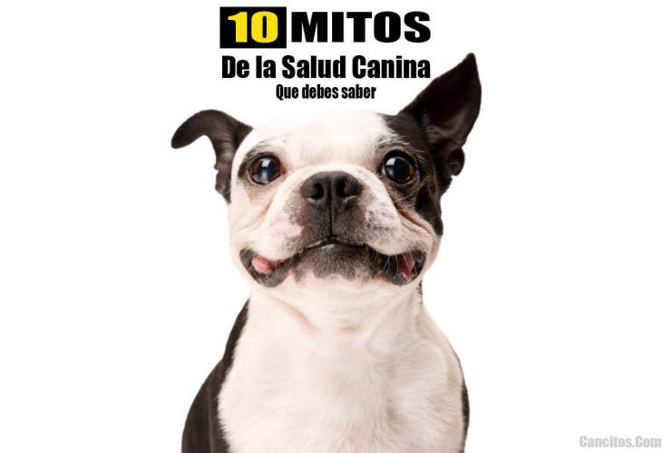 Mitos salud perros