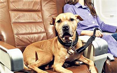 Perros viajando en avión