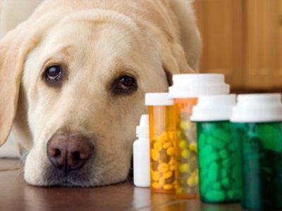sedacion de perros