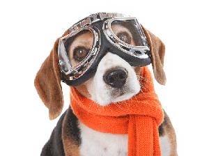 ¿Como Viajar en Avión Con Un Perro? – Método Seguro Para Llevar a Tu Mascota de Viaje
