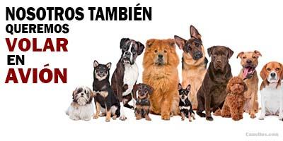 Varias razas de perros