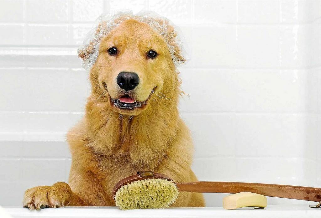 ¿Cópmo bañar a mi perro?