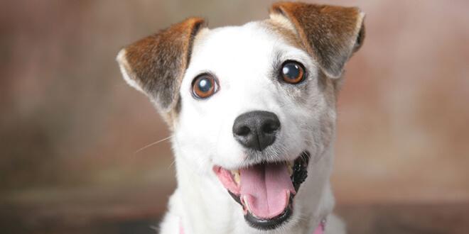 Quiero que mi perro sea feliz