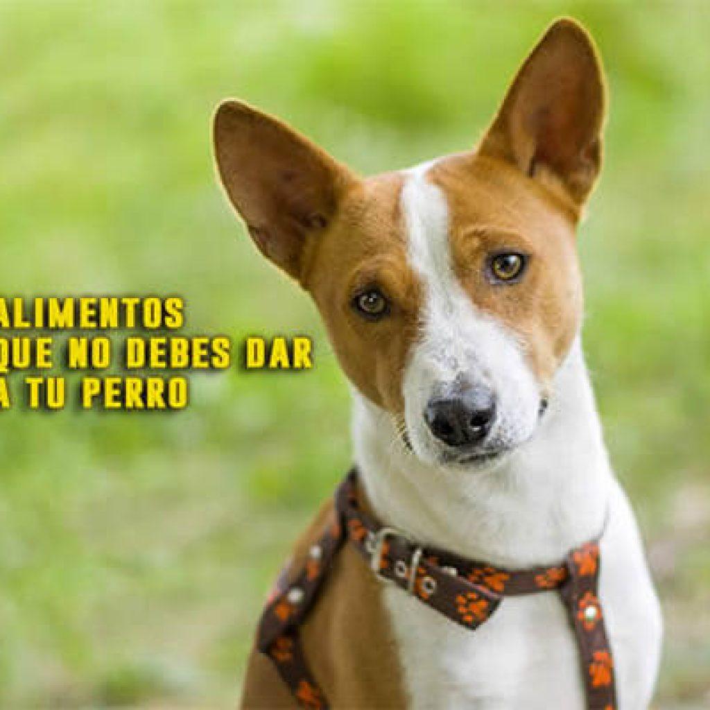 10 Alimentos Prohibidos Para Los Perros Ten Cuidado