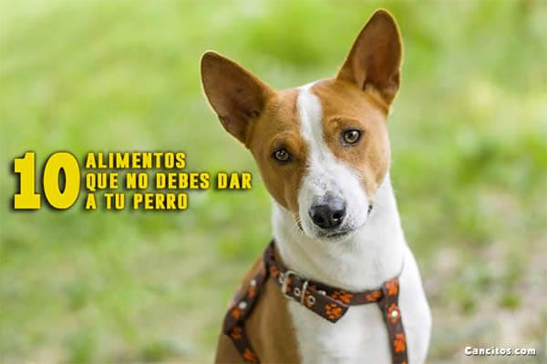 10 Alimentos Prohibidos Para los Perros ¡Ten Cuidado!