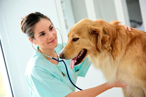 ¿Como se diagnostica el cancer en un perro?