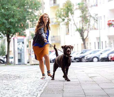 Consejo infalible para que tu perro aprenda a cruzar la calle educadamente