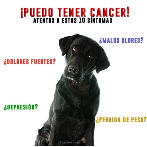 Su perro puede tener cancer si presenta uno de estos sintomas