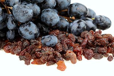 Molestias estomacales por uvas pasas en los perros