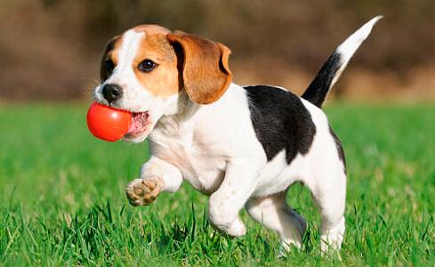 Juegos para estres en los perros