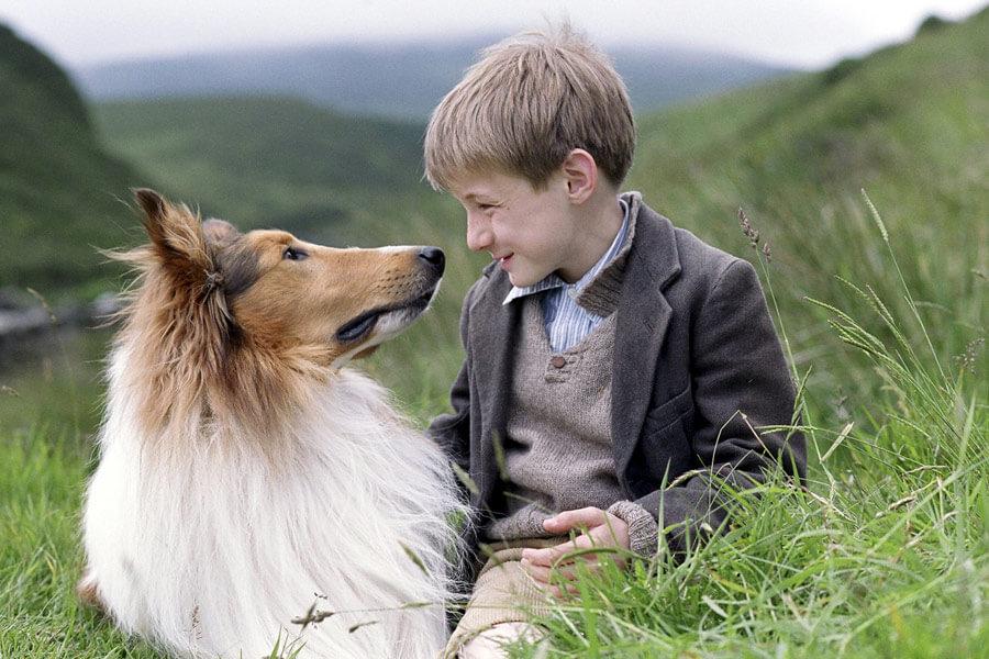 Imagenes del perro lassie